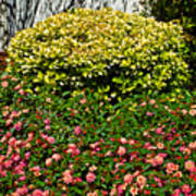 Yellow Coleus And Lantana At Pilgrim Place In Claremont-california Poster