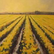 Yellow Daffodil Glow Poster