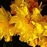 Yellow Daffodils 4 Poster