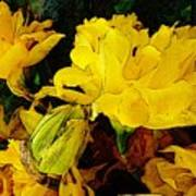 Yellow Daffodils 6 Poster