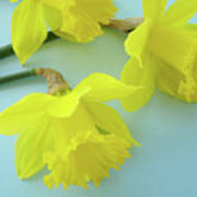 Yellow Daffodils Artwork Spring Flowers Art Prints Nature Floral Art Poster