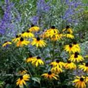 Yellow Daisies And Purple Sage Poster