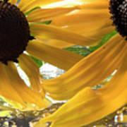 Yellow Droplet Petals Poster