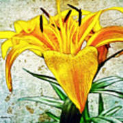 Yellow Easter Lily Poster