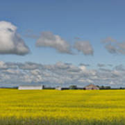 Yellow Fields And Blue Clouds Poster