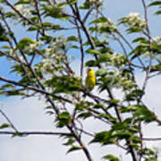 Yellow Finch And Flowers Poster