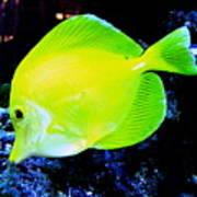 Yellow Fish Poster