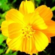 Yellow Flower On Black Background Poster