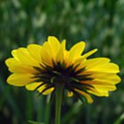 Underside, Petals, Yellow Poster