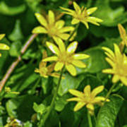 Yellow Flowers On A Green Carpet Poster
