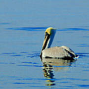 Yellow Headed Pelican Poster
