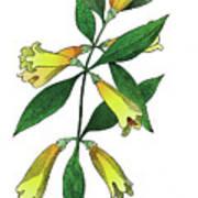 Yellow Jessamine Poster