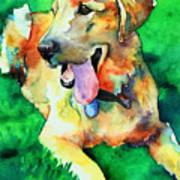 Yellow Labrador Poster