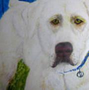 Yellow Labrador Retriever Original Acrylic Painting Poster