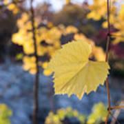 Yellow Leaf Newton Upper Falls Fall Foliage Poster