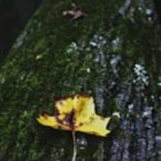 Yellow Leaf On Mossy Tree Poster