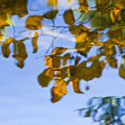 Yellow Leaf Reflections Poster