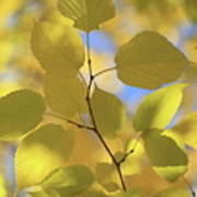 Yellow Leaves. Poster