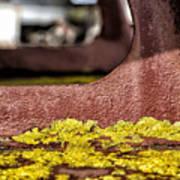 Yellow Lichen Poster