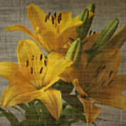 Yellow Lilies With Old Canvas Texture Background Poster