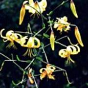 Yellow Lilies In Fort Tryon Park Poster
