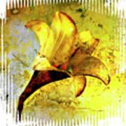 Yellow Lily Poster by Bernard Jaubert