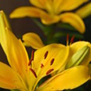 Yellow Lily Mirror Poster
