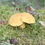Yellow Mushroom Poster