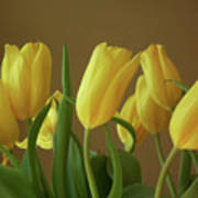 Yellow My Favorite Tulips Poster