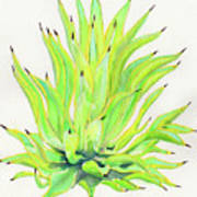 Yellow Octopus Agave Poster