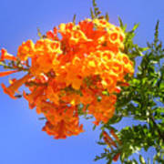 Yellow-orange Horn Flowers 01 Poster