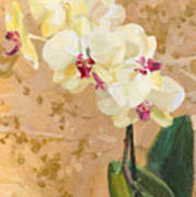 Yellow Orchid Poster