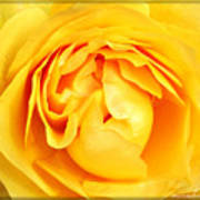 Yellow Petals Poster by Cathie Tyler
