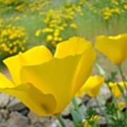 Yellow Poppy Flower Meadow Landscape Art Prints Baslee Troutman Poster