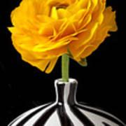 Yellow Ranunculus In Striped Vase Poster