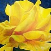 Yellow Rose Poster by Dana Redfern