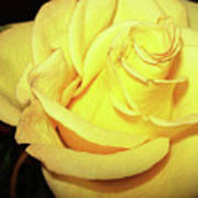 Yellow Rose For Friendship Poster