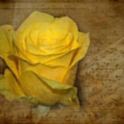 Yellow Rose With Old Notes Paper On The Background Poster