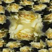 Yellow Roses 2 Poster