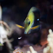 Yellow Spotted Aquarium Fish Poster