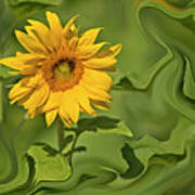 Yellow Sunflower On Green Background Poster