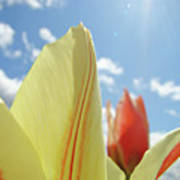 Yellow Tulip Flower Art Prints Spring Blue Sky Clouds Baslee Troutman Poster
