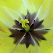 Yellow Tulip Macro Spring Floral Garden Baslee Troutman Poster