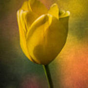 Yellow Tulip Textures Of Spring Poster