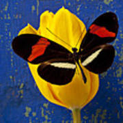 Yellow Tulip With Orange And Black Butterfly Poster