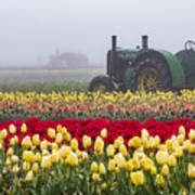 Yellow Tulips And Tractors Poster