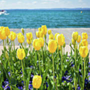 Yellow Tulips Near Lake Poster