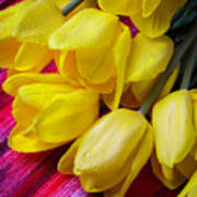 Yellow Tulips With Dew Drops Poster