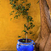 Yellow Wall, Blue Pot Poster