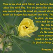 Yellow Wildflower - Romans Poster